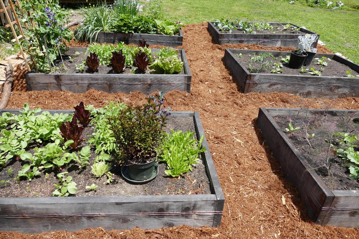Some our our raised beds